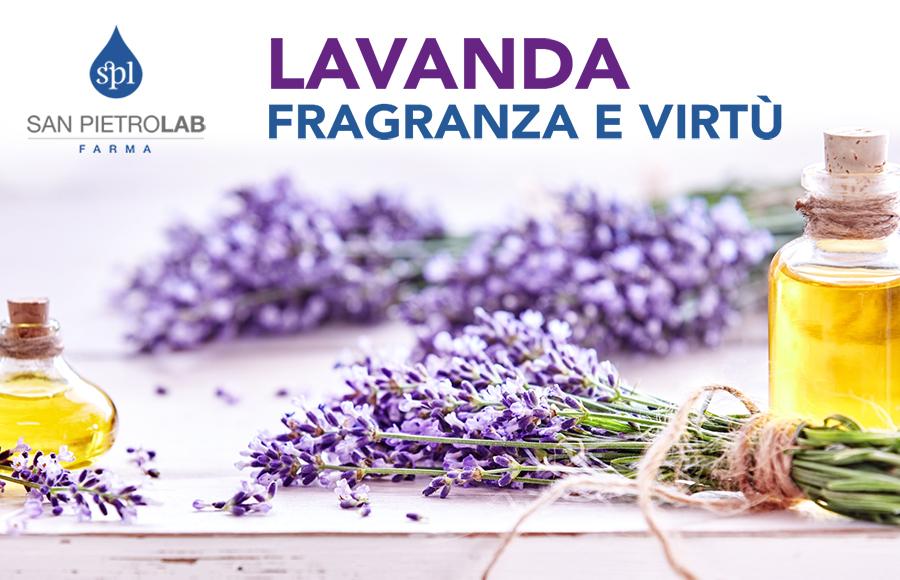 Lavanda: fragranza e virtù